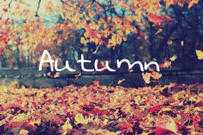 Autumn Title Grey 420x280